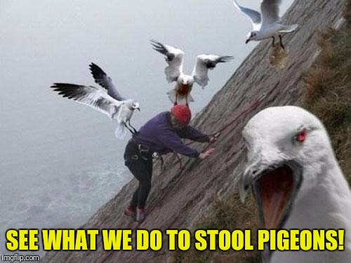 Angry Birds | SEE WHAT WE DO TO STOOL PIGEONS! | image tagged in angry birds | made w/ Imgflip meme maker