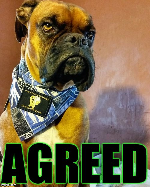 Grumpy Dog | AGREED | image tagged in grumpy dog | made w/ Imgflip meme maker