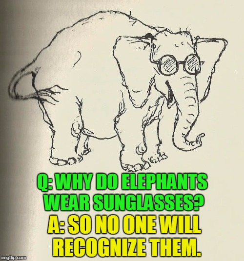 Finally, an Elephant Answers Why | Q: WHY DO ELEPHANTS WEAR SUNGLASSES? A: SO NO ONE WILL RECOGNIZE THEM. | image tagged in vince vance,elephant in sunglasses,i wear my sunglasses,animals,elephants,memes | made w/ Imgflip meme maker