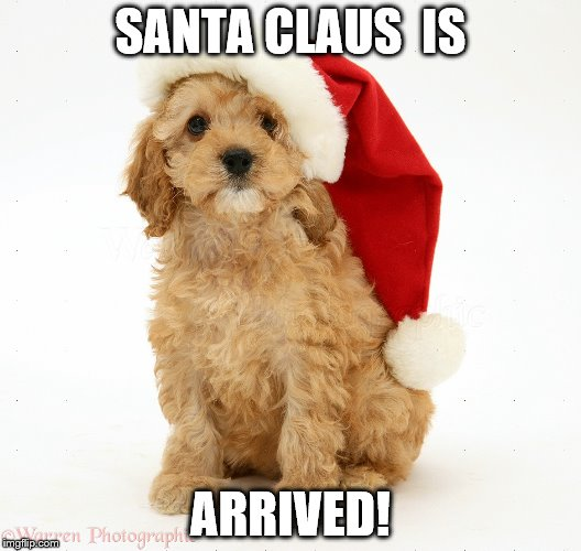 Santa Claus Dog is Arrived  | SANTA CLAUS  IS ARRIVED! | image tagged in dog | made w/ Imgflip meme maker