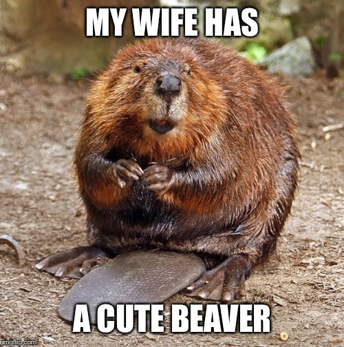 MY WIFE HAS A CUTE BEAVER | made w/ Imgflip meme maker
