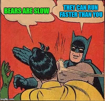 Batman Slapping Robin Meme | BEARS ARE SLOW THEY CAN RUN FASTER THAN YOU | image tagged in memes,batman slapping robin | made w/ Imgflip meme maker