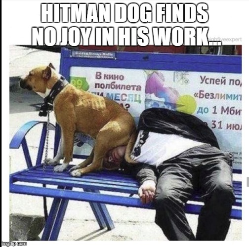 HITMAN DOG FINDS NO JOY IN HIS WORK... | image tagged in dog | made w/ Imgflip meme maker