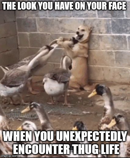 In the wrong Part of Town |  THE LOOK YOU HAVE ON YOUR FACE; WHEN YOU UNEXPECTEDLY ENCOUNTER THUG LIFE | image tagged in wrong part of town,thug life,thugs,saggythugpants,thuglife,thug dogs | made w/ Imgflip meme maker