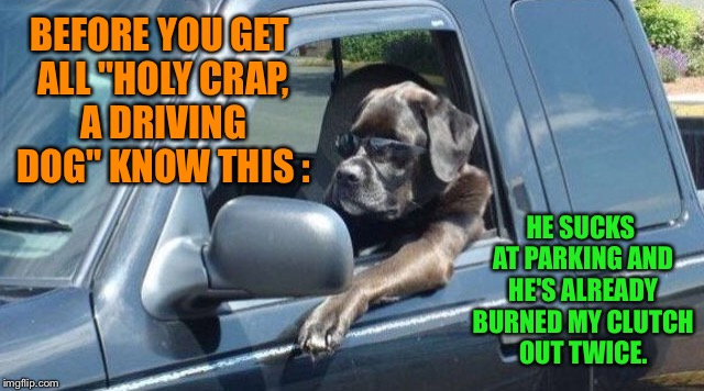 "He also likes to chase squirrels off-road  | BEFORE YOU GET ALL ""HOLY CRAP, A DRIVING DOG"" KNOW THIS : HE SUCKS AT PARKING AND HE'S ALREADY BURNED MY CLUTCH OUT TWICE. 