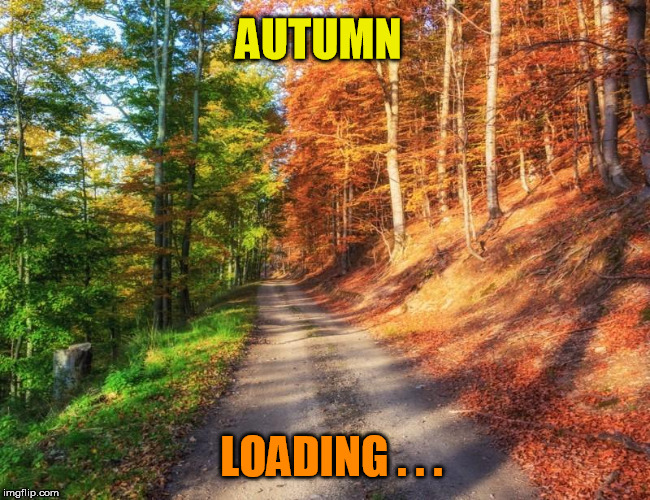 50% completed...please wait... | AUTUMN LOADING . . . | image tagged in autumn,loading,nature | made w/ Imgflip meme maker