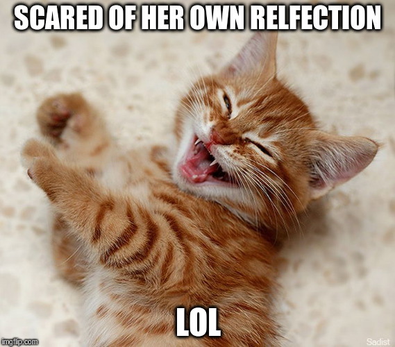 SCARED OF HER OWN RELFECTION LOL | made w/ Imgflip meme maker