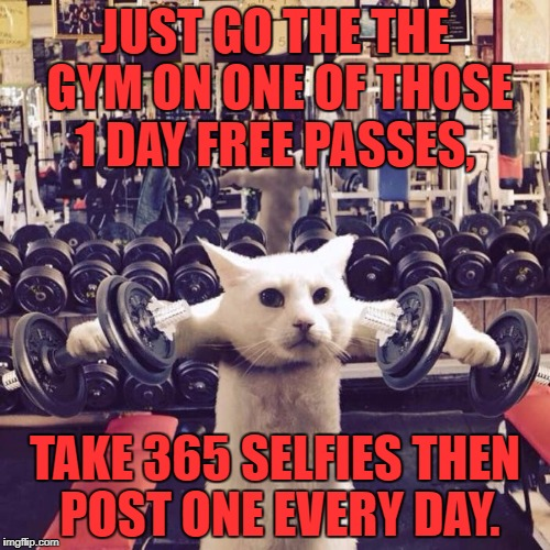 Gym Cat | JUST GO THE THE GYM ON ONE OF THOSE 1 DAY FREE PASSES, TAKE 365 SELFIES THEN POST ONE EVERY DAY. | image tagged in gym cat,exercise,lazy,memes,funny,funny memes | made w/ Imgflip meme maker