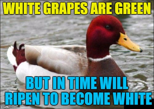 In the same way green bananas ripen to become yellow... :) | WHITE GRAPES ARE GREEN BUT IN TIME WILL RIPEN TO BECOME WHITE | image tagged in memes,malicious advice mallard,white grapes,fruit | made w/ Imgflip meme maker