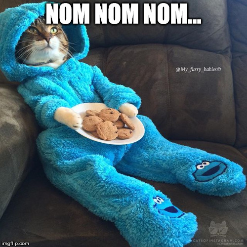 Cat in PJS | NOM NOM NOM... | image tagged in cat in pjs | made w/ Imgflip meme maker