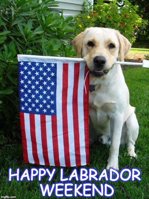 Labor Day | HAPPY LABRADOR WEEKEND | image tagged in labor day,labrador,weekend,holiday,fall | made w/ Imgflip meme maker