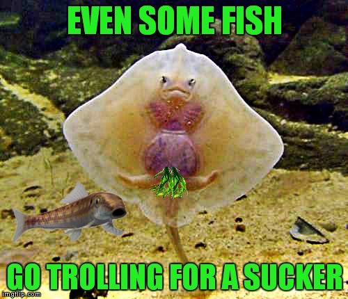 EVEN SOME FISH GO TROLLING FOR A SUCKER | made w/ Imgflip meme maker