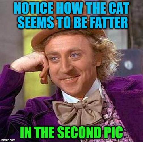 Creepy Condescending Wonka Meme | NOTICE HOW THE CAT SEEMS TO BE FATTER IN THE SECOND PIC | image tagged in memes,creepy condescending wonka | made w/ Imgflip meme maker
