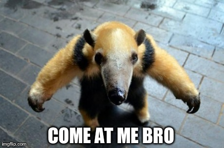 1v5rh saw this anteater on r aww and this is what came to mind imgflip,Anteater Meme Generator