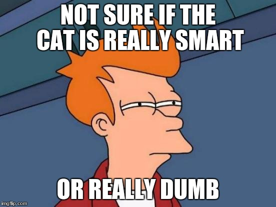 Futurama Fry Meme | NOT SURE IF THE CAT IS REALLY SMART OR REALLY DUMB | image tagged in memes,futurama fry | made w/ Imgflip meme maker