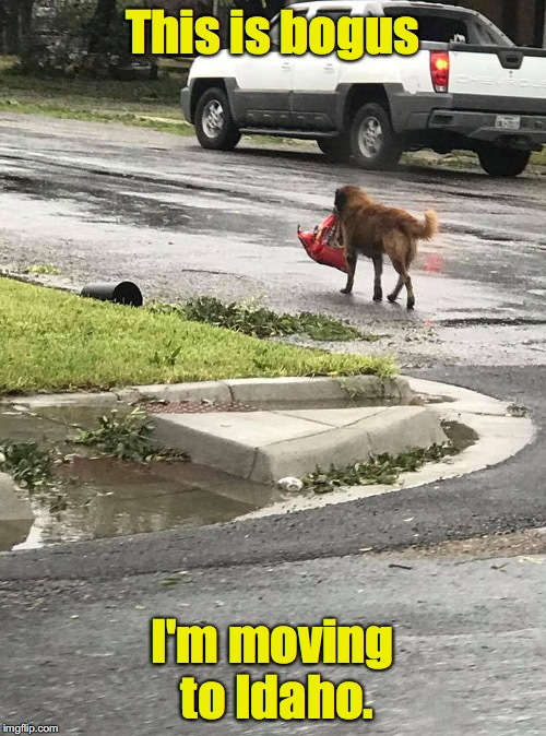 Where they never have hurricanes | This is bogus I'm moving to Idaho. | image tagged in hurricane harvey,dog | made w/ Imgflip meme maker