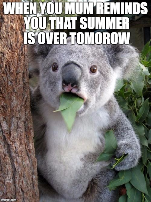 Surprised Koala Meme | WHEN YOU MUM REMINDS YOU THAT SUMMER IS OVER TOMOROW | image tagged in memes,surprised koala | made w/ Imgflip meme maker