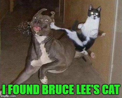 I FOUND BRUCE LEE'S CAT | made w/ Imgflip meme maker