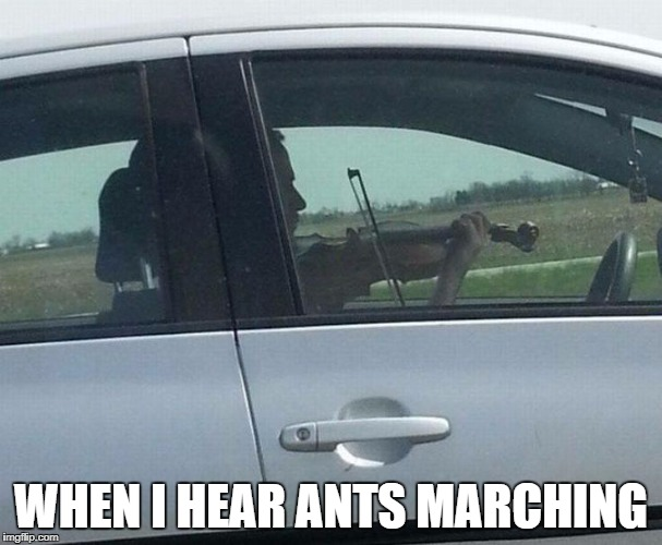 DMB Ants Marching | WHEN I HEAR ANTS MARCHING | image tagged in dmb,dave matthews band,boyd tinsley,violin,ants marching | made w/ Imgflip meme maker