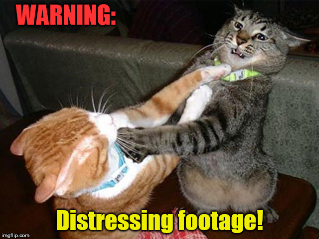 WARNING: Distressing footage! | made w/ Imgflip meme maker