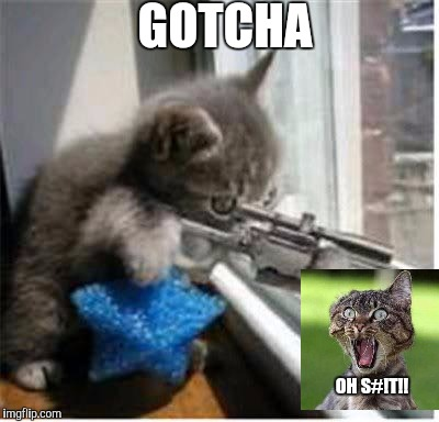 cats with guns | GOTCHA OH S#!T!! | image tagged in cats with guns | made w/ Imgflip meme maker