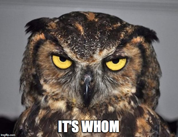 angry owl | IT'S WHOM | image tagged in angry owl | made w/ Imgflip meme maker