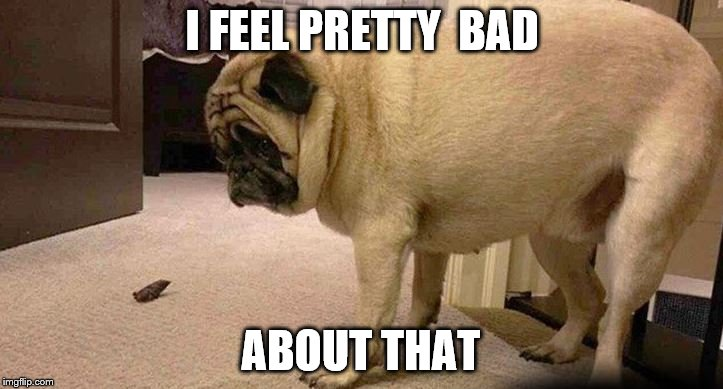 Guilty as Charged | I FEEL PRETTY  BAD ABOUT THAT | image tagged in sad dog | made w/ Imgflip meme maker