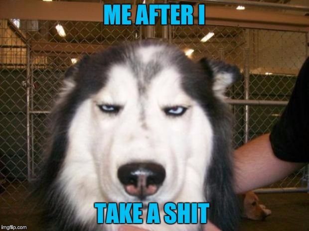 Annoyed Dog | ME AFTER I TAKE A SHIT | image tagged in annoyed dog | made w/ Imgflip meme maker