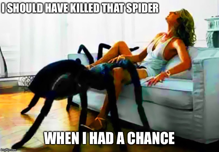 Two-timing Arachnid | I SHOULD HAVE KILLED THAT SPIDER WHEN I HAD A CHANCE | image tagged in memes,two timing arachnid,nsfw,spider | made w/ Imgflip meme maker