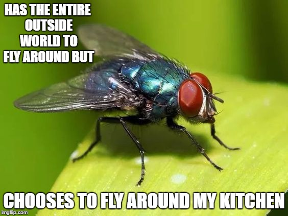 On the upside, their days are numbered with the cold weather setting in. | HAS THE ENTIRE OUTSIDE WORLD TO FLY AROUND BUT CHOOSES TO FLY AROUND MY KITCHEN | image tagged in pests,annoying | made w/ Imgflip meme maker