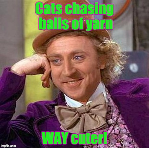 Creepy Condescending Wonka Meme | Cats chasing balls of yarn WAY cuter! | image tagged in memes,creepy condescending wonka | made w/ Imgflip meme maker