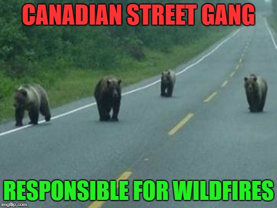 CANADIAN STREET GANG RESPONSIBLE FOR WILDFIRES | made w/ Imgflip meme maker