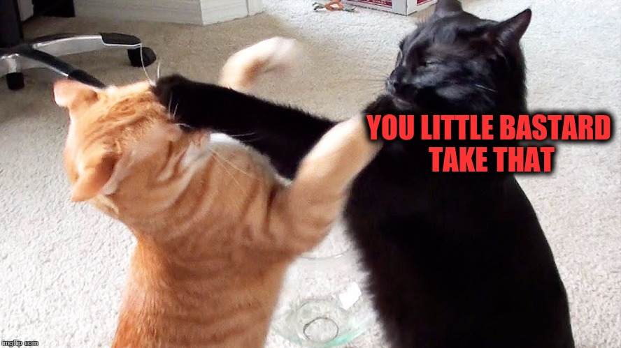YOU LITTLE BASTARD TAKE THAT | made w/ Imgflip meme maker