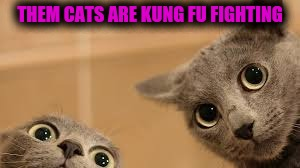 THEM CATS ARE KUNG FU FIGHTING | made w/ Imgflip meme maker