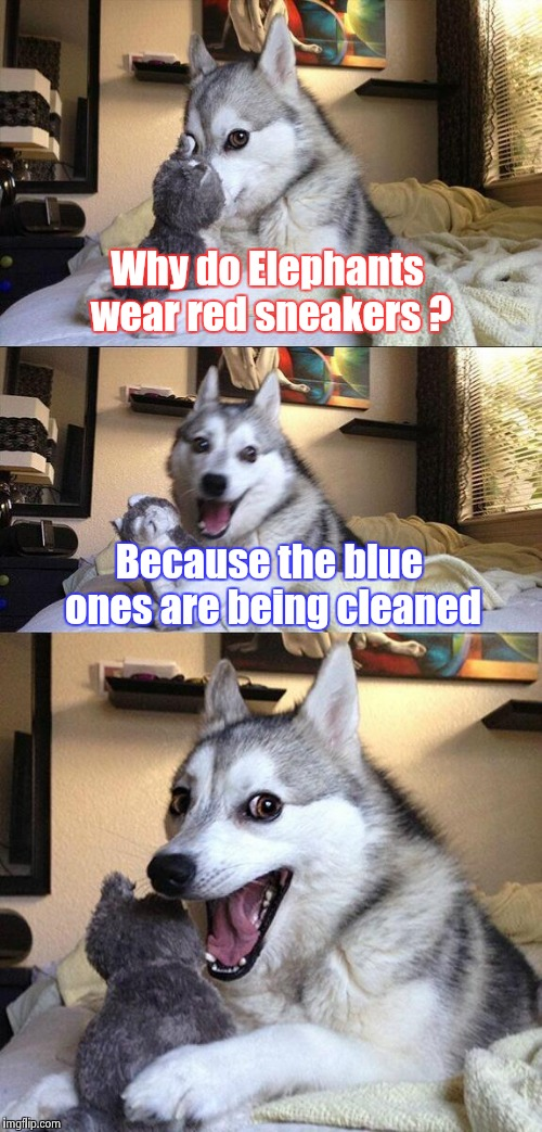 Bad Pun Dog Meme | Why do Elephants wear red sneakers ? Because the blue ones are being cleaned | image tagged in memes,bad pun dog | made w/ Imgflip meme maker