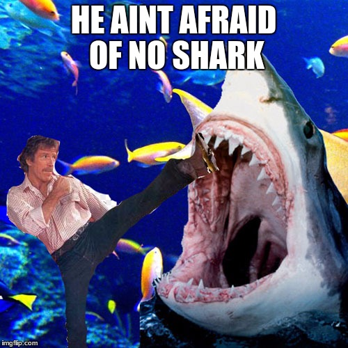 Norris vs Shark | HE AINT AFRAID OF NO SHARK | image tagged in norris vs shark,chuck norris,shark | made w/ Imgflip meme maker