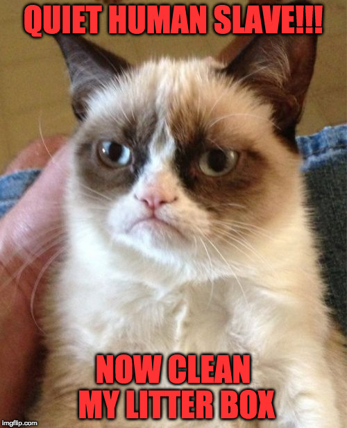 Grumpy Cat Meme | QUIET HUMAN SLAVE!!! NOW CLEAN MY LITTER BOX | image tagged in memes,grumpy cat | made w/ Imgflip meme maker