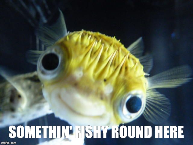 SOMETHIN' FISHY ROUND HERE | made w/ Imgflip meme maker