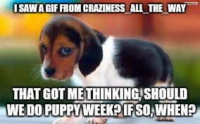 Here's the gif! https://imgflip.com/gif/1v59os |  I SAW A GIF FROM CRAZINESS_ALL_THE_WAY; THAT GOT ME THINKING, SHOULD WE DO PUPPY WEEK? IF SO, WHEN? | image tagged in cute puppies,puppies,craziness_all_the_way,beagle,week | made w/ Imgflip meme maker