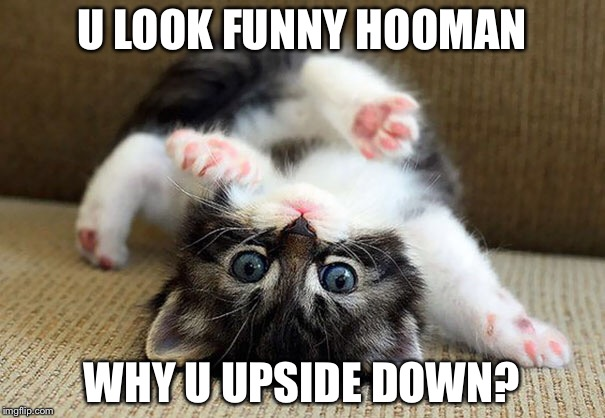 Hmmm kitten |  U LOOK FUNNY HOOMAN; WHY U UPSIDE DOWN? | image tagged in kittens,cute kittens | made w/ Imgflip meme maker