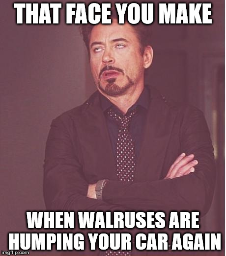 Just another day in the life... | THAT FACE YOU MAKE WHEN WALRUSES ARE HUMPING YOUR CAR AGAIN | image tagged in memes,face you make robert downey jr,walrus | made w/ Imgflip meme maker