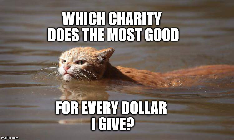 WHICH CHARITY DOES THE MOST GOOD FOR EVERY DOLLAR I GIVE? | image tagged in angry flood cat | made w/ Imgflip meme maker