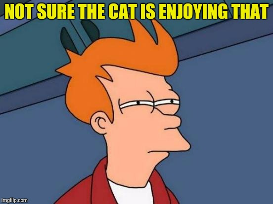 Futurama Fry Meme | NOT SURE THE CAT IS ENJOYING THAT | image tagged in memes,futurama fry | made w/ Imgflip meme maker