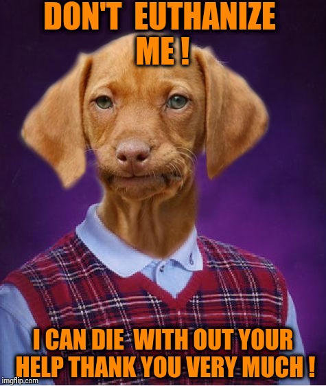 Your dog has a right to grow old and die natrualy too !  | DON'T  EUTHANIZE ME ! I CAN DIE  WITH OUT YOUR HELP THANK YOU VERY MUCH ! | image tagged in bad luck raydog,wtf,memes | made w/ Imgflip meme maker