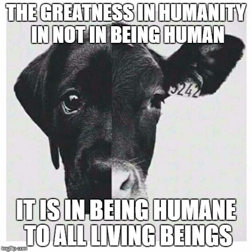 All About Vegan | THE GREATNESS IN HUMANITY IN NOT IN BEING HUMAN IT IS IN BEING HUMANE TO ALL LIVING BEINGS | image tagged in vegan lifestyle | made w/ Imgflip meme maker