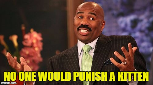 Steve Harvey Meme | NO ONE WOULD PUNISH A KITTEN | image tagged in memes,steve harvey | made w/ Imgflip meme maker