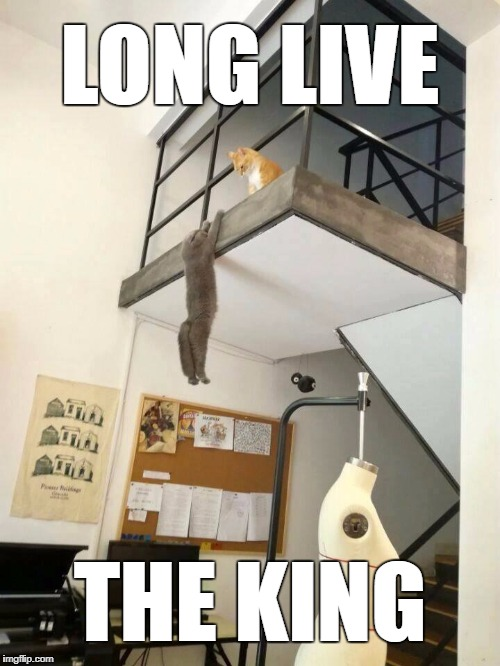 Lion King IRL | LONG LIVE THE KING | image tagged in lion king,the lion king,cats | made w/ Imgflip meme maker