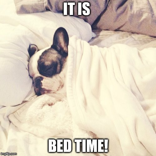 Bed Time Puppy  | IT IS BED TIME! | image tagged in dog | made w/ Imgflip meme maker