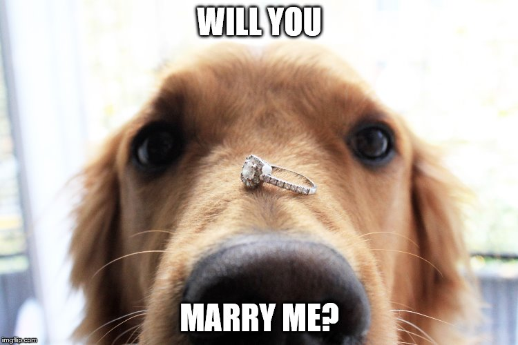 Will you marry me dog | WILL YOU MARRY ME? | image tagged in dog | made w/ Imgflip meme maker