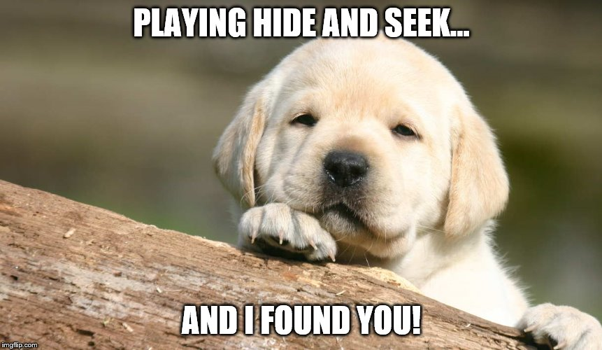 I found you dog | PLAYING HIDE AND SEEK... AND I FOUND YOU! | image tagged in dog | made w/ Imgflip meme maker